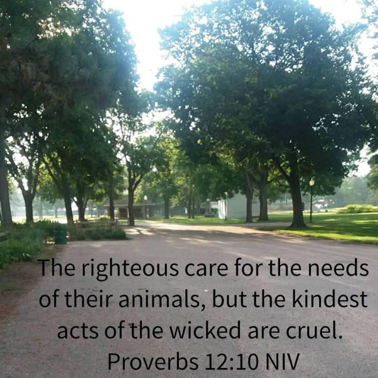 proverbs challenge 12